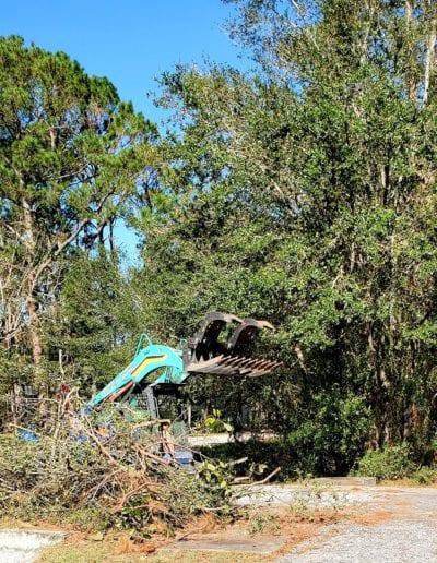 tree service foley