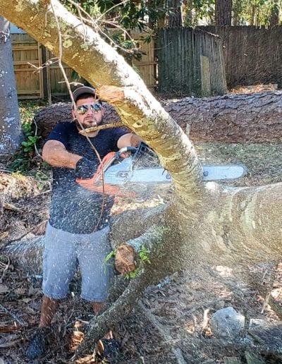 tree service gulf shores
