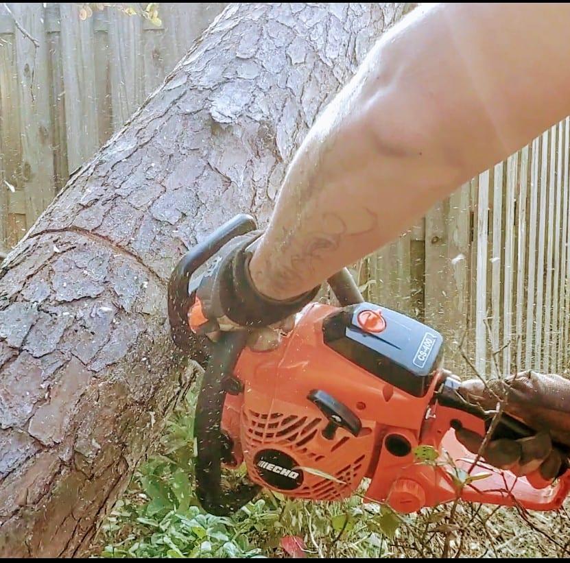 tree service daphne